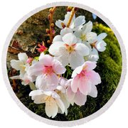 White Apple Blossom In Spring Round Beach Towel