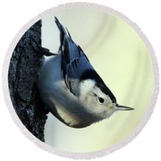 White Breasted Nuthatch Wading River New York Round Beach Towel by Bob Savage