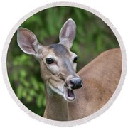 White Tailed Deer No. 2 Round Beach Towel
