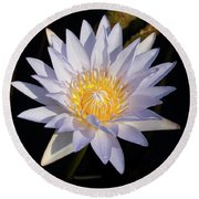 Round Beach Towel featuring the photograph White Water Lily by Steve Stuller