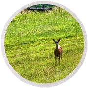 Round Beach Towel featuring the photograph Whitetail Deer And Hay Rake by Thomas R Fletcher