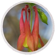 Wild Columbine Round Beach Towel by Barbara Bowen