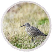 Round Beach Towel featuring the photograph Willet by Michael Chatt