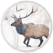 Round Beach Towel featuring the photograph Winter Bull by Mike Dawson
