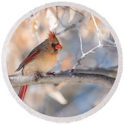 Winter Cardinal Round Beach Towel by Debbie Green