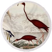 Wood Ibis, Scarlet Flamingo, White Ibis Round Beach Towel