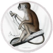 Round Beach Towel featuring the drawing Yellow Baboon, Papio Cynocephalus by J D L Franz Wagner
