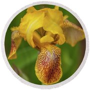 Round Beach Towel featuring the photograph Yellow Bearded Iris by Brenda Jacobs
