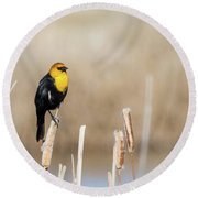 Round Beach Towel featuring the photograph Yellow Headed Blackbird by Michael Chatt