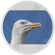 Yellow-legged Gull - Larus Michahellis Round Beach Towel by Jivko Nakev