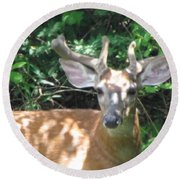 Round Beach Towel featuring the photograph Young Buck Outside My Kitchen Window by Betty Pieper