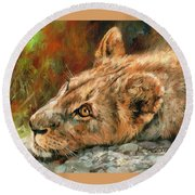 Young Lion Round Beach Towel by David Stribbling