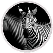 Round Beach Towel featuring the photograph Zebra by Charuhas Images