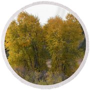 Aspen Trees In The Fall Co Round Beach Towel