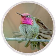 Anna's Hummingbird Round Beach Towel by Tam Ryan