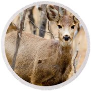 Mule Deer In The Pike National Forest Round Beach Towel