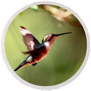 103456 - Ruby-throated Hummingbird Round Beach Towel