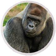 10898 Gorilla Round Beach Towel by Pamela Williams