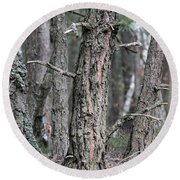 Round Beach Towel featuring the photograph Pine Trees by Dariusz Gudowicz