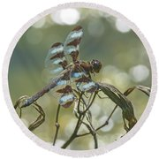 12 Spotted Skimmer Round Beach Towel
