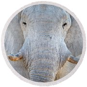 African Elephant Loxodonta Africana Round Beach Towel by Panoramic Images