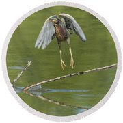 Round Beach Towel featuring the photograph Green Heron by Tam Ryan