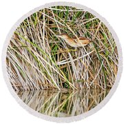 Round Beach Towel featuring the photograph Least Bittern by Tam Ryan