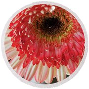 Nice Gerber Round Beach Towel by Elvira Ladocki