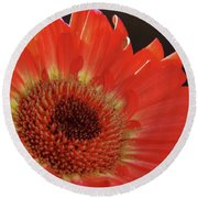 Round Beach Towel featuring the photograph Red Gerber by Elvira Ladocki