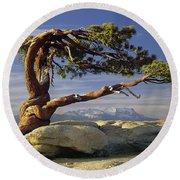 1m6701 Historic Jeffrey Pine Sentinel Dome Yosemite Round Beach Towel