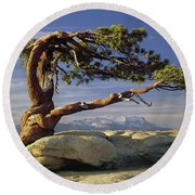 1m6701 Historic Jeffrey Pine Sentinel Dome Yosemite Round Beach Towel