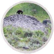 American Black Bear Yellowstone Usa Round Beach Towel