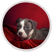 American Pitbull Puppy Round Beach Towel