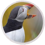 Atlantic Puffin - Scotland Round Beach Towel
