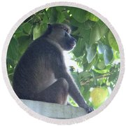 Baboon Sits Guard  Round Beach Towel