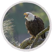 Round Beach Towel featuring the photograph Bald Eagle by Doug Herr