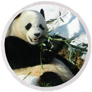 Bao Bao Sittin' In The Snow Taking A Bite Out Of Bamboo1 Round Beach Towel