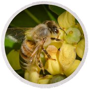 Bees Gathering From Pittosporum Flowers Round Beach Towel