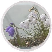 Round Beach Towel featuring the photograph Bellflower by Heiko Koehrer-Wagner