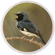 Black-throated Blue Warbler Round Beach Towel
