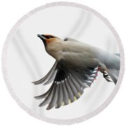 Round Beach Towel featuring the photograph Bohemian Waxwing  by Mircea Costina Photography
