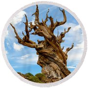Bristlecone Pine Tree 3 Round Beach Towel