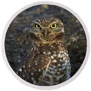 Round Beach Towel featuring the photograph Burrowing Owl by Doug Herr