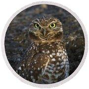 Burrowing Owl Round Beach Towel