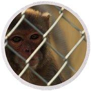 Caged Monkey Round Beach Towel