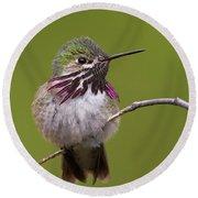 Calliope Hummingbird Round Beach Towel