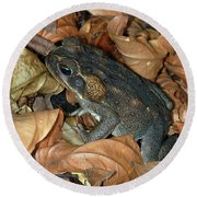 Round Beach Towel featuring the photograph Cane Toad by Breck Bartholomew