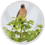 Round Beach Towel featuring the photograph Cedar Waxwing by Ricky L Jones