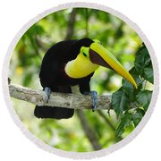 Chestnut-mandibled Toucan Round Beach Towel
