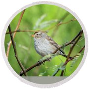 Round Beach Towel featuring the photograph Chipping Sparrow by Tam Ryan